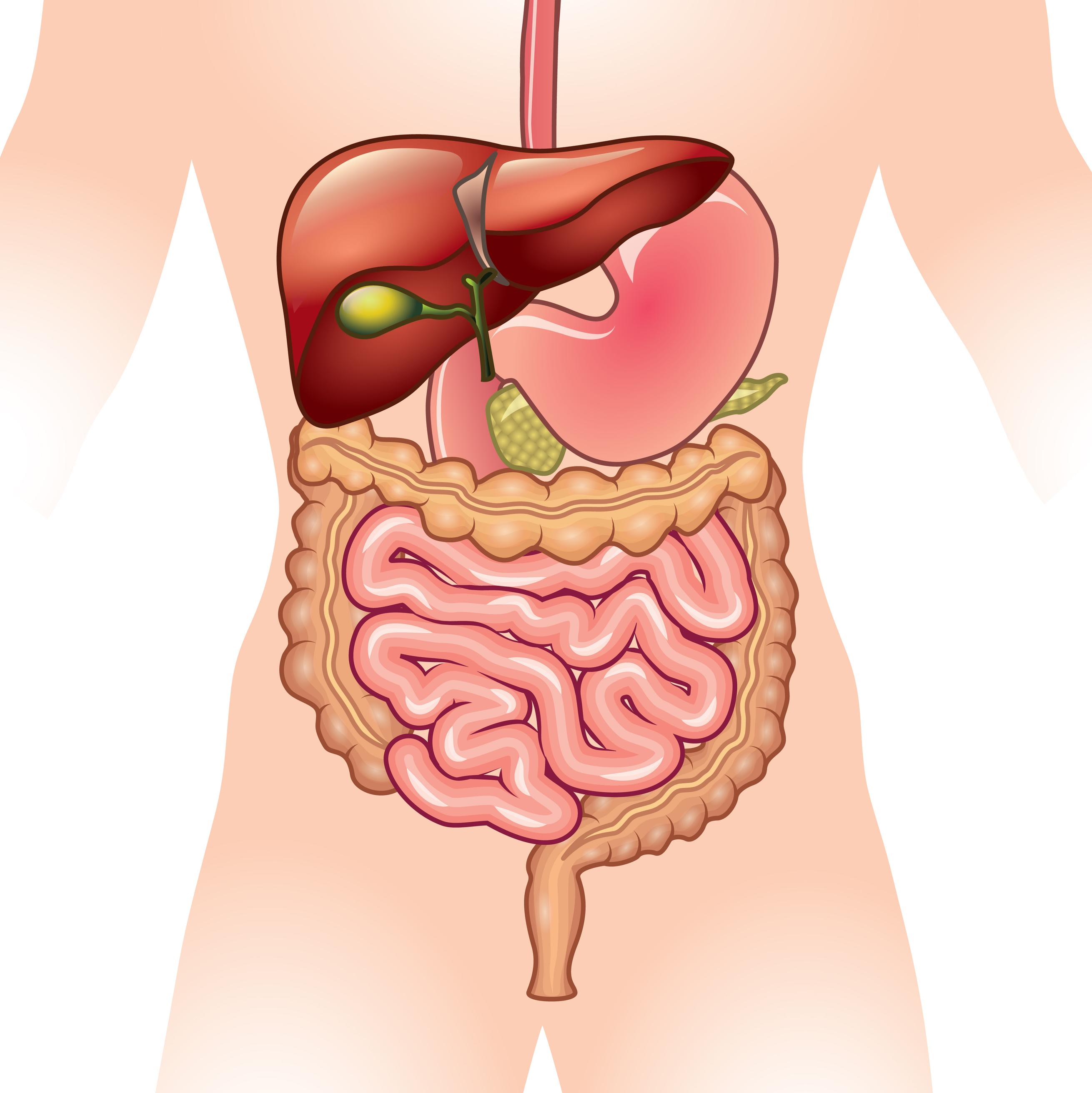 Alverín a simeticon v liečbe IBS